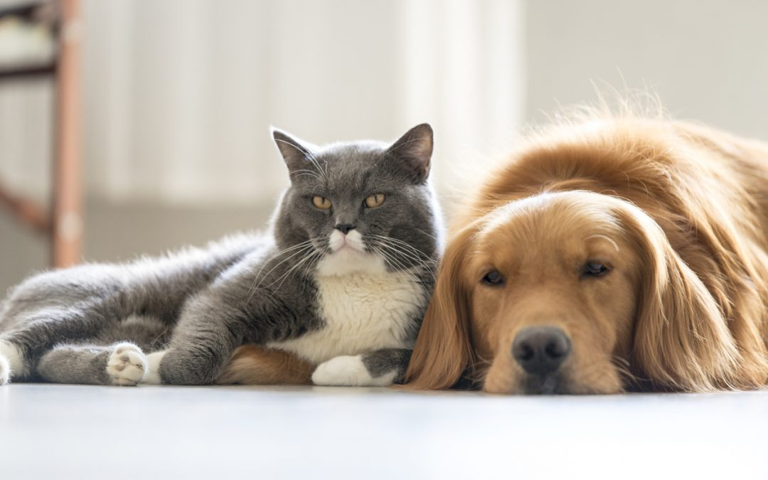 How to Create a Home Both Inside and Out Your Pets Will Love